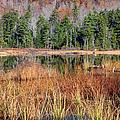 Guinea Pond - Sandwich New Hampshire Usa by Erin Paul Donovan