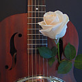 Guitar And Rose 2 by Kelly Holm