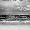 Gulf Of Mexico In Black And White by Theresa Campbell