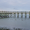 Gulf Pier by Barbara Blanchard