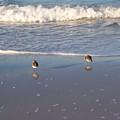 Gulf Shore 2 by Gigi Croom