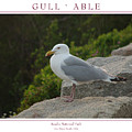 Gull Able by Peter Muzyka
