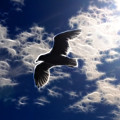 Gull Against Sky Fractal by Lawrence Christopher