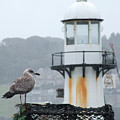 Gull And Lighthouse by John R Moore