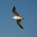 Gull As Seen From The Beach by Richard Bryce and Family