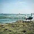 Gull Beach by Sebastien Coell