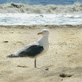 Gull by Dee Flouton