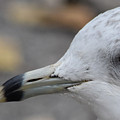 Gull Eye by Maria Keady