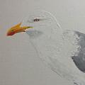 Gull by Harold Teel