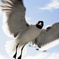 Gull In Flight by Marilyn Hunt