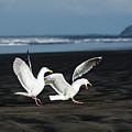 Gulls In Love by Robert Potts