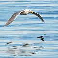 Gull Mirrored by Mike Dawson