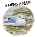 Gull Nap Time by John M Bailey