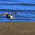 Gull On The Beach  by Lyle Crump