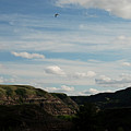 Gull Over The Badlands by Katherine Nutt