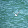 Gull Over The Gulf by Charles Green