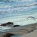 Gull Over Tybee Island Beach by Doris Blessington