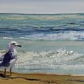 Gull by Susan Hanna
