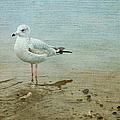 Gull by Theresa Tahara