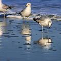 Gull Trio by Angela Rath