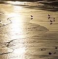 Gulls At Gloucester by John Taylor