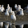 Gulls At The Beach by Sue Harper
