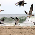 Gulls Away by Eric Dimeck