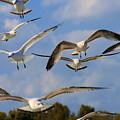 Gulls En Masse by Angela Rath