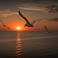 Gulls Flying Towards The Sun by Randall Nyhof