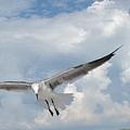 Gulls In Flight by Judy  Waller