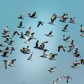 Gulls In Flight by Randy J Heath
