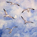 Gulls Is Flight by Suzanne Krueger