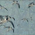 Gulls by James W Johnson
