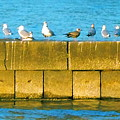 Gulls by Jennifer Addington