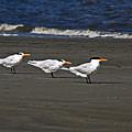 Gulls On Beach by David Campbell