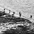 Gulls On The Shore by Joe Bonita