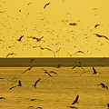 Gulls Orange Tint by Eddie Barron