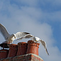 Gulls by Philip Pound