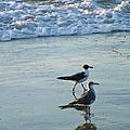 Gulls Strolling Tybee Island Beach by Doris Blessington