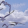 Gulls Will Be Gulls by Mike Shepley DA Edin