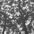 Gunmetal Grey Shadows -  by Georgia Mizuleva