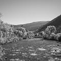 Gunnison River In Autumn Bw by Michael Ver Sprill