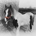 Gypsy Horse by Elisabeth Lucas