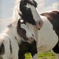 Gypsy Mare And Foal by Elizabeth Vieira