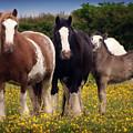 Gypsy Mares And Foal by Elizabeth Vieira