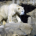 Habitat - Memphis Zoo by D'Arcy Evans