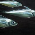 Haddock by Fiona Jack