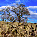 Hadrians Tree by Tim Dussault