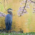 Haiku, Heron And Cherry Blossoms by Michael Wheatley