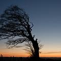 Half A Tree On Raddon Top by Pete Hemington
